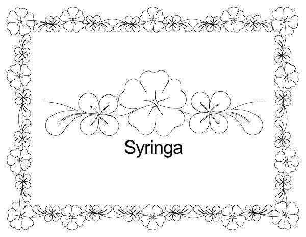 Syringa border set.jpg