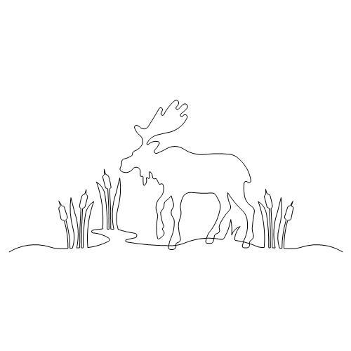 Moose single.jpg